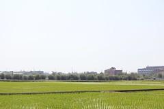 水稻 (Lyao_1) Tags: animal taiwan canon eos 650d flower photo plant puppy photography tree nature lens sun green grass paddyrice colorful sky 博美 柴犬 水稻 花 樹 天空 草 自然 攝影