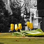 waiting for spring thumbnail