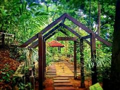 https://goo.gl/maps/2XLL7vJxMjS2  #travel #holiday #trip #traveling #Park #garden #tree #Asian #Malaysia #KualaLumpur #travelMalaysia #holidayMalaysia #旅行 #度假 #花草树木 #公园 #亚洲 #马来西亚 #吉隆坡 #马来西亚旅行 #马来西亚度假 #taman #green #大自然 #nature