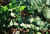 Hiding place (Alksnyte) Tags: analog multipleexposures nikonf4 smctakumar lomography800 green portrait