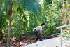 day twelve at the croco-cun zoo (dolanh) Tags: mexico zoo crococun yucatan crocodilefarm