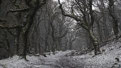 Badgworthy Winter Woodland (EmPhoto.) Tags: doonevalley lornadoone jdblackmore exmoor uk woodland snowy winter frozen blizzard emmiejgee landscapepassion sonya7r sonyzeiss2470mm hike