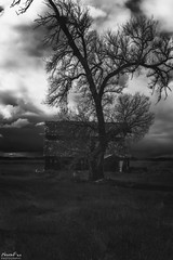 Spooky (NormFox) Tags: bw bnw barn blackandwhite california clouds country farm field grass landscape monochrome mood outdoor rural sky spooky tree abandoned newman unitedstates us