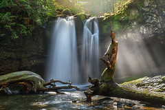 'The Third Cascade' - Vancouver Island (Gavin Hardcastle - Fototripper) Tags: vancouverisland waterfall spring moss river light rays stumps creek stocking park gavinhardcastle green nature falls sun