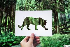 Jaguar cutout (DJR-FOTO) Tags: jaguar cutout outdoor outside outoors draussen 4kuhd deutschland djrfoto djr papier paper natur nature awesome beautiful animal green woods wald sunny