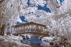 pequeño puente de madera - small wooden bridge Infrared view_720nm (Luis FrancoR) Tags: pequeñopuentedemaderasmallwoodenbridgeinfraredview720nm infraredview infrared infrarojos ngc ngs ngd parque park bridge colombiainfrarred tulua