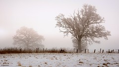 03032018-DSC_0100 (vidjanma) Tags: hiver brouillard givre matin arbres silhouettes couleurs ardenne