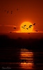 Sunrise Special (Sharon's Nature) Tags: scenic landscape animalscape nebraska gruscanadensis canon birdsinflight migration sunrise platteriver sandhillcranes