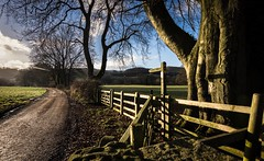 On the right track (Phil-Gregory) Tags: path light trees hathersage nikon d7200 peakdistict derbyshire tokina tokina1120mmatx naturalphotography naturephotography nationalpark uk