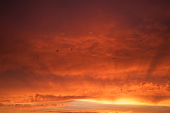 The sky is the daily bread of the eyes 🌅 (Yonatan Souid) Tags: sky burning skyscape fire dream france atlantic ocean seascape birds paradise meditation present moment exploration travel ré island