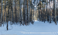 2018-03-19-08-07-26-7D2_3928 (tsup_tuck) Tags: 2018 march moscow spring woods