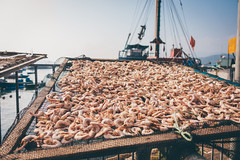 Drying shrimp (]vincent[) Tags: hk hong kong cheung chau vincent portrait people girl ginger emma sony rx 100 mk iv beautiful beer boat bicycle fish shrimp dryed food asia china