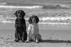 Wet pals (Flemming Andersen) Tags: dogs zigzag beach sand nature buddy water dog blackwhite outdoor bw hund animal sea thisted northdenmarkregion denmark dk