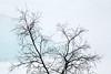 Marcher dans les nuages...quand le monde s'inverse... (Korf-Adri) Tags: abisko suède sweden tree snow river walking steps prints détails empreinte blue white paysage landscape