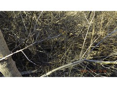 DSCF0908 (kevinredden1) Tags: hikes streambed hidden