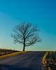 That tree again (d_russell) Tags: sky shawneemissionpark winter eveninglight