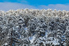 Snow at Troodos (321) (Polis Poliviou) Tags: snow nationalpark troodosmountains cypruscountryside clouds cloudy 2018 countryside freezing cyprus lovenature love naturepictures naturepics forest rural mount mountain mountains pinewood cold frost winter pinetrees pinetree mediterranean forestpark nationalforestpark olympus peak frozen morning environment nature ice snowtrees snowtree sports island cyprustheallyearroundisland cyprusinyourheart yearroundisland zypern republicofcyprus κύπροσ ©polispoliviou2018 polispoliviou polis poliviou πολυσ πολυβιου lovecyprus ski skateboard skiing skiers wood green earth canon