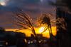 Bokeh sunset (Maria Eklind) Tags: dof bokeh ribersborg sunset reflection öresundsparken city outdoor light ribban malmö spegling depthoffield winter malmölive sunlight solnedgång sky himmel sweden skånelän sverige se