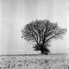 Wrong exposure and wrong development - Reggio Emilia - March 2018 (cava961) Tags: winter snow grain rolleiflex35f analogue analogico monochrome monocromo bianconero bw 6x6