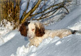 Fun in the snow (1)
