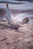 DSC_8151.jpg (kimsegal59) Tags: archespark landscape mesaarch moab redrock utah