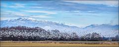 Snowy Flight (Maclobster) Tags: snow geese reifel bird sanctuary north shore mountains