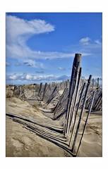 Désordre (Charlottess) Tags: mars nikon5300 portsaintlouisdurhône camargue bouchesdurhône dune sable