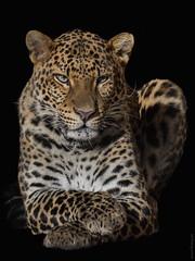 Java Leopard (marionB-fotografie) Tags: tier tiere animal animals katze raubtier raubkatzen cat cats leopard nikon d7100 tierparkberlin