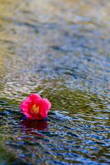 京都-城南宮- (blast-all777) Tags: 城南宮 jonangu 日本 japan 京都 kyoto 花 flower 春 spring メジロ 梅 しだれ梅 椿 camellia