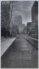 Snowy afternoon in Pittsburgh (AlainC3) Tags: pittsburgh pennsylvanie pennsylvania neige snow nb noiretblanc bw blackandwhite usa unitedstates
