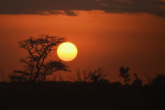 Acacia Sunset (Rod Waddington) Tags: africa african afrique afrika äthiopien ethiopia ethiopian etiopia ethiopie etiopian acacia tree sunset sun sunsetting landscape clouds orange branches trees