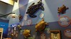 20180214_42 Florida Sea Turtles Loggerhead Marinelife Center Juno Beach Florida USA (FRABJOUS DAZE - PHOTO BLOG) Tags: loggerhead marinelife center loggerheadmarinelifecenter turtlehospital junobeach palmbeachcounty pbc fl fla florida sunshinestate usa unitedstates america amerikka yhdysvallat turtle seaturtle kilpikonna merikilpikonna kilpikonnasairaala