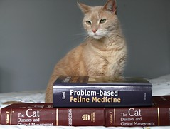 Jimmy's sources of inspiration (Kerri Lee Smith) Tags: jimmy cats felines tabbies books veterinarybooks orangetabbies orangecats beigecats beigetabbies happycaturday catdiseases catillnesses