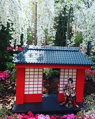 Drooping Sakura and Kimono doll (puandeat) Tags: sakura sakuratee tree nature flowers kimono kimonodoll doll japanese