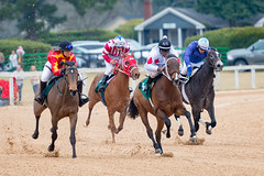 Aiken Trials 2018 First Race (APGougePhotography) Tags: horse horses thoroughbred race races aiken aikentrainingtrack track training equestrian equine aikencounty southcarolina south carolina color running nikon nikond800 d800 adobe lightroom adobelightroom
