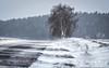 winter`s comeback :-) I love it! (Florian Grundstein) Tags: schneeverwehung wind sturm birke strase road tree birk snow storm windy stormy mood winter ice cold palatinate upper bavaria germany bayern oberpfalz dahoam heimat regensburg schwandorf teublitz burglengenfeld
