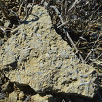 Packstone with Tentaculites thumbnail