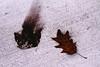 (rafalweb (moved)) Tags: texture leaf autumn sidewalk canon eos 7d efs 1755 f28