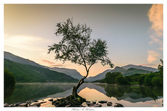 Lone Tree at Sunrise in Llanberis, North Wales UK (Mike A Mckenna) Tags: sunrise lonetree water mountains lake northwales snowdonia llanberis reflections reflection reservoir clouds red white trees green sunlight