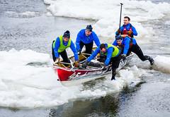 On pousse (Patrick Boily) Tags: canot course race glace ice fleuve river quebec levis tamron