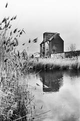 let me be (flyerkat_L.E.) Tags: lindenau leipzig rhenus hafen film analog agfasuperpan200 black white bw monochrome nikon fm2 35mm