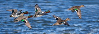 Teal Flyby (Explored 10-03-18)