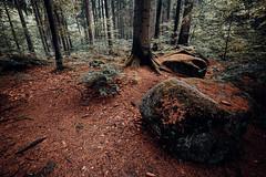 In den Wäldern (Gruenewiese86) Tags: 6d canon harz landschaft steinernerenne tamron wasserfälle wernigerode landscape natur wald wälder wandern waldlandschaft forest forestscape orange teal canon6d