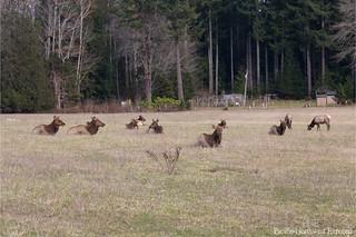 Elk 7154