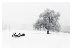 Weeping (bprice0715) Tags: canon canoneos5dmarkiii canon5dmarkiii landscape landscapephotography nature naturephotography beautiful beauty beautyinnature blackandwhite bw blackwhite monochrome mono snow snowylandscape snowing winter white weepingwillow cold frigid fineart