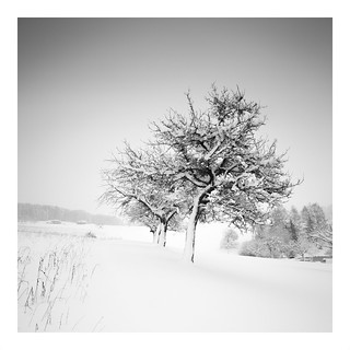 five in snow Iii