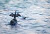 cormoran seul sur son rocher (Guit07) Tags: cormoran rhône eau oiseau