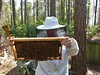 Apiary Inspector (alansurfin) Tags: honeybees beekeeping beekeeper apismellifera apicultura agriculture bees brood florida