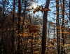 Autumn feeling #landscape #photography #outdoors #hike #leafs #colors #brown #sun #beams #forrest #trees #travel #mountains (cristian.valeriu.radu) Tags: landscape photography outdoors hike leafs colors brown sun beams forrest trees travel mountains