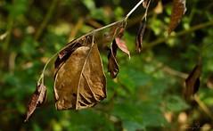 Naturaleza (clauseLUNA) Tags: bosque conocer viajar hojas naturaleza naturalmente fotoclauseluna